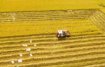 Báo cáo thường niên ĐBSCL: Nỗi buồn của lúa gạo