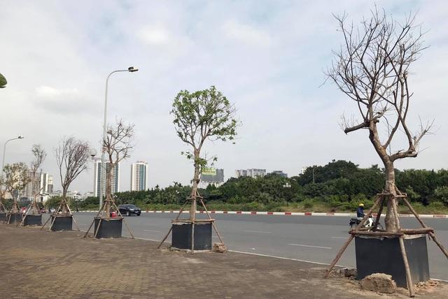 Hà Nội: Cách trồng khác lạ khiến mười cây chết chín, một cây gật gù - 7