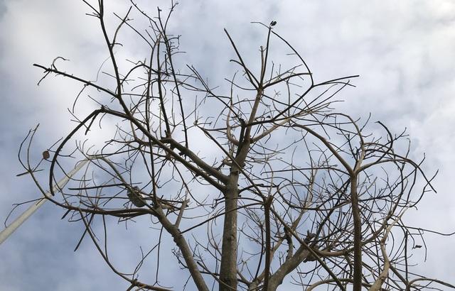 Hà Nội: Cách trồng khác lạ khiến mười cây chết chín, một cây gật gù - 5
