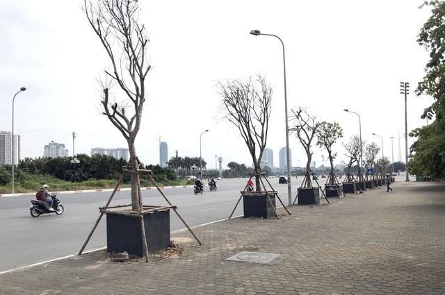 Hà Nội: Cách trồng khác lạ khiến mười cây chết chín, một cây gật gù - 3