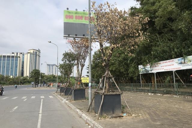 Hà Nội: Cách trồng khác lạ khiến mười cây chết chín, một cây gật gù - 6