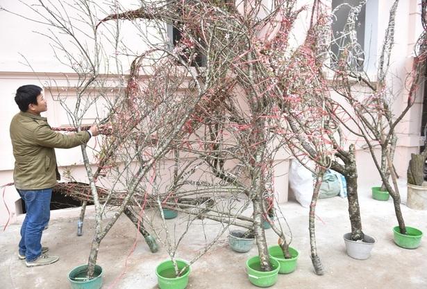 Thủ tướng: Xử lý nghiêm việc chặt đào rừng về chơi Tết