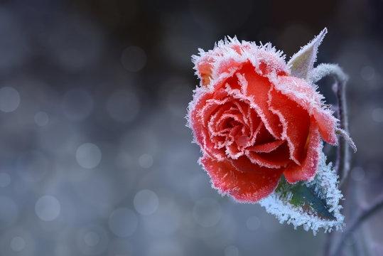 Tử vi ngày 18/1/2021: Tuổi Dần băng băng tiến bước, tuổi Tỵ lao đao thị phi