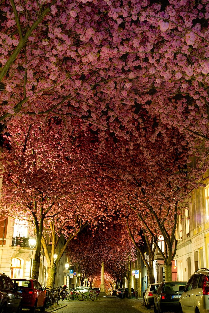 ... những con đường hoa anh đào đẹp nhất thế giới qua ống kính các nhiếp ảnh gia. Bạn sẽ thấy vẻ đẹp liêu trai của loài hoa này qua mỗi khung hình.