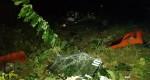 Lào Cai: Xe khách lao xuống vực sâu 200m, 45 người thương vong