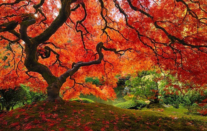 Mùa thu đã về ở Bắc bán cầu