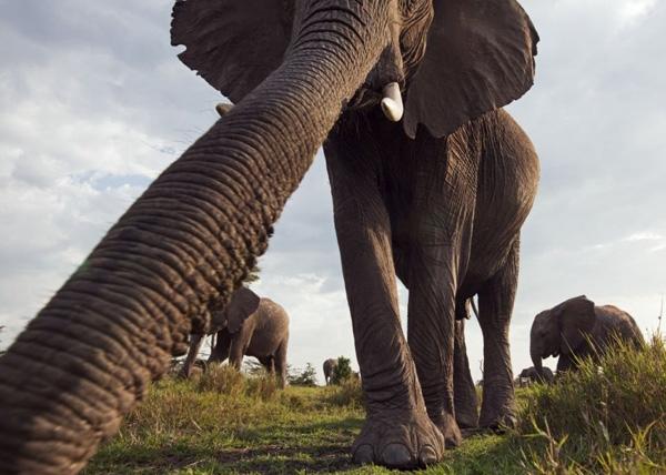 Châu Phi hoang dã qua ống kính giấu kín