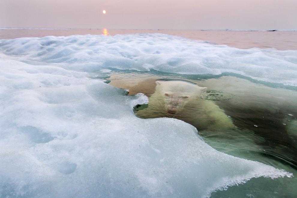 Những bức ảnh xuất sắc đạt giải National Geographic năm 2013