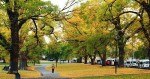 Đắm say mùa thu Melbourne