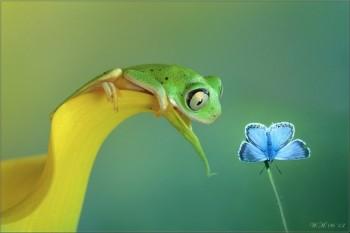 [Chùm ảnh] Vẻ đẹp của côn trùng và thực vật