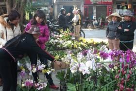 hoa canh trung quoc lan at thi truong hoa tet