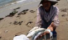 Vụ cá chết ở miền Trung: Vì sao khoanh vùng rộng?