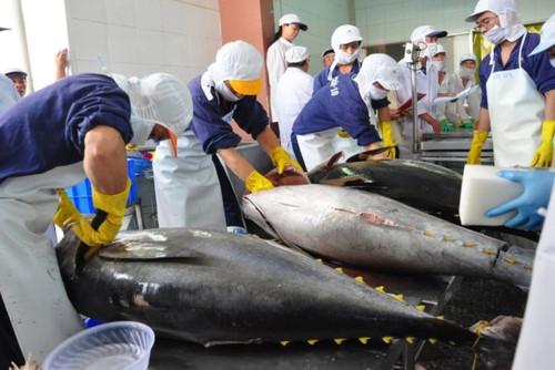Xuất khẩu cá ngừ sang Italia tăng mạnh