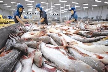Xuất khẩu cá tra sang Mỹ có thể tăng trong thời gian tới