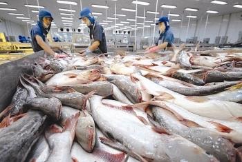 Doanh nghiệp xuất khẩu cá tra nỗ lực vượt dịch Covid-19