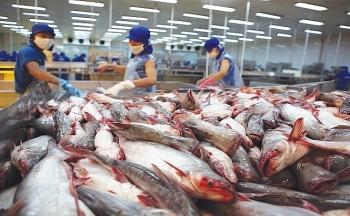Giá thấp, doanh nghiệp không mặn mà xuất khẩu cá tra sang Colombia