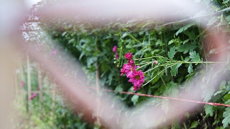lang hoa tay tuu ruc rich vao vu tet