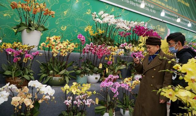 Hoa lan hồ điệp giá hàng chục triệu đồng xuống phố phục vụ Tết