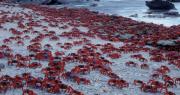 10 hòn đảo quái dị và bí ẩn trên khắp thế giới