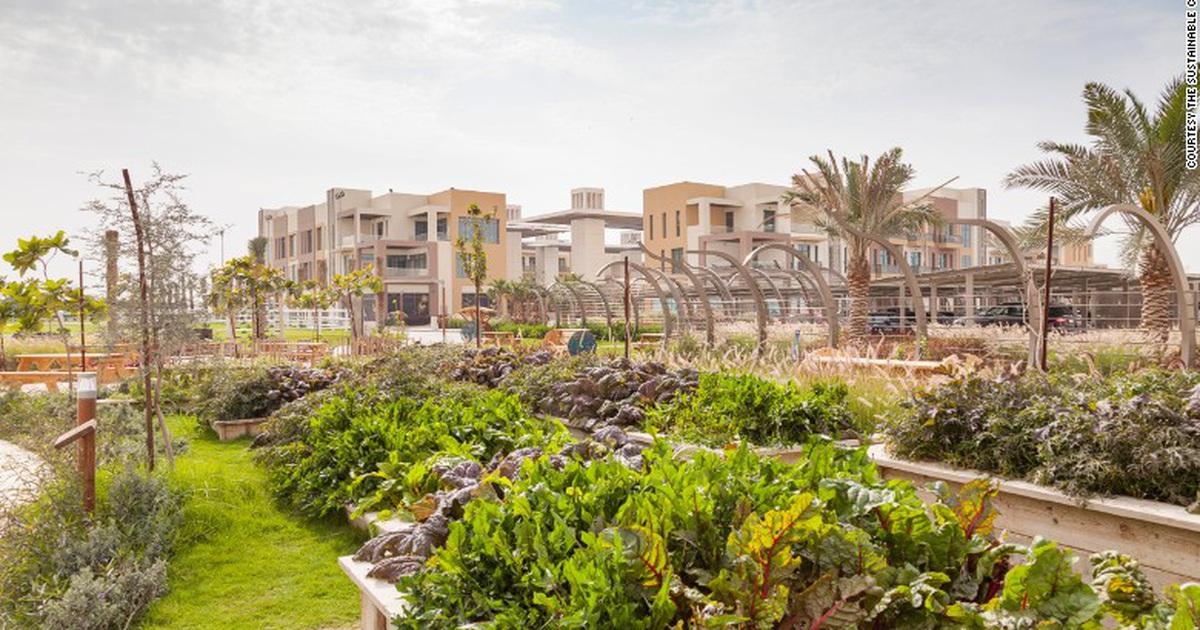 """Cảnh """"trồng rau, nuôi gà"""" trong thành phố xanh đầu tiên ở Dubai"""