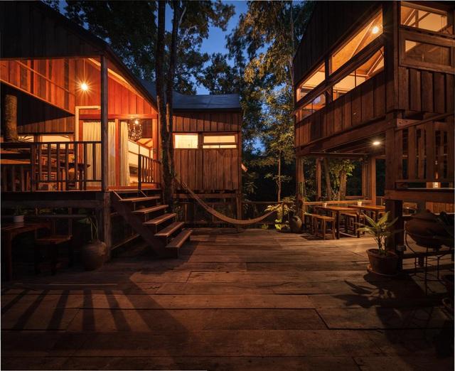 Gia đình chờ 30 năm để cây lớn thành rừng rồi mới xây nhà