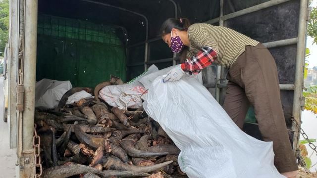 Hà Nội: Thu tiền triệu từ chế tác sừng trâu ngày giáp Tết Tân Sửu - 5