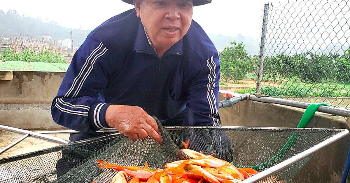 Tết ông Công, ông Táo: Người nuôi cá chép nhận đặt cọc hàng trăm triệu đồng