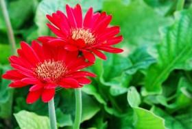 nhung loai hoa mang nhieu tai loc trong nam moi