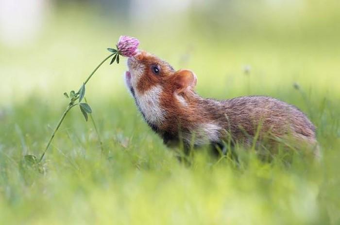 """[Chùm ảnh] Ngộ nghĩnh động vật """"thưởng"""" hoa"""