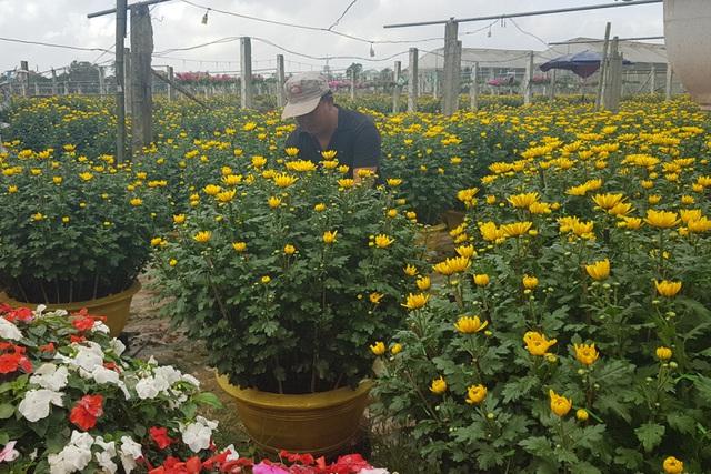 Làng hoa lớn nhất Quảng Trị rực rỡ đón Xuân - 9