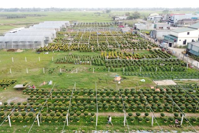 Làng hoa lớn nhất Quảng Trị rực rỡ đón Xuân - 4