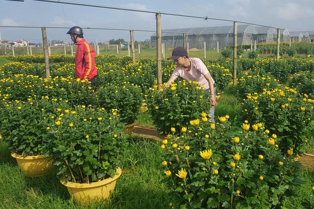 Làng hoa lớn nhất Quảng Trị rực rỡ đón Xuân - 5