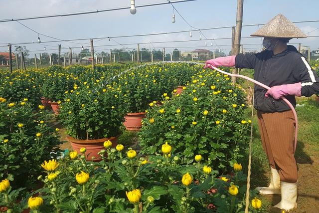 Làng hoa lớn nhất Quảng Trị rực rỡ đón Xuân - 6