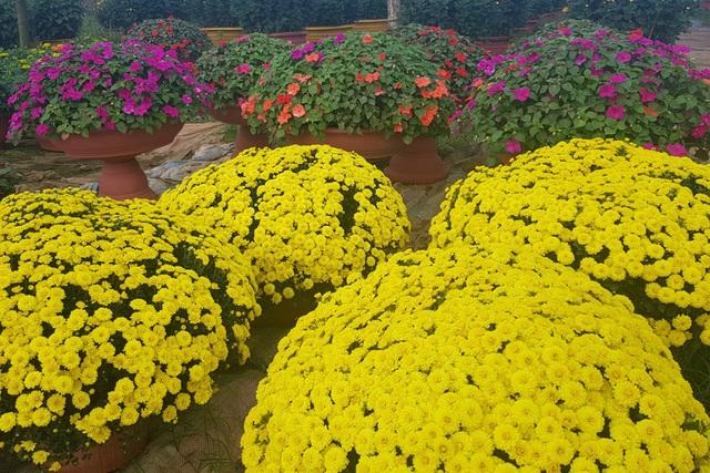Làng hoa lớn nhất Quảng Trị rực rỡ đón Xuân - 7