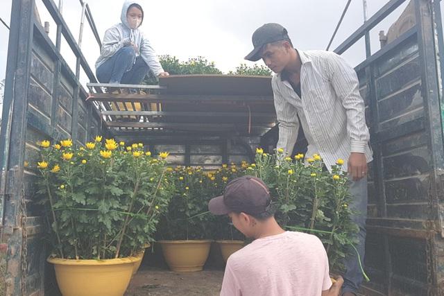 Làng hoa lớn nhất Quảng Trị rực rỡ đón Xuân - 8