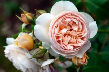 Tử vi tuần mới 8/2 - 14/2: Xử Nữ nên nhìn tích cực, Bảo Bình được vận đào hoa