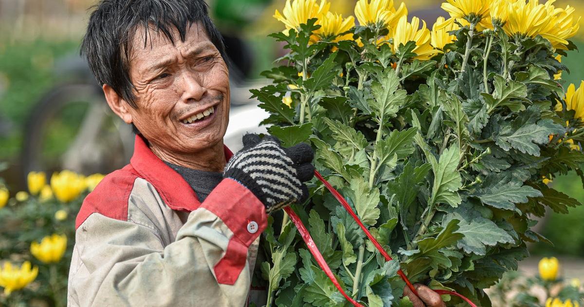 """Giá hoa thấp kỷ lục, người trồng hoa Tây Tựu """"ngồi trên đống lửa"""""""