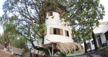 Ngôi nhà lạ bao trọn cây xoài 85 tuổi của người đàn ông yêu thiên nhiên