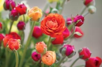 Tử vi ngày 12/2/2021: Xử Nữ đào hoa nở rộ, Song Ngư bốc đồng