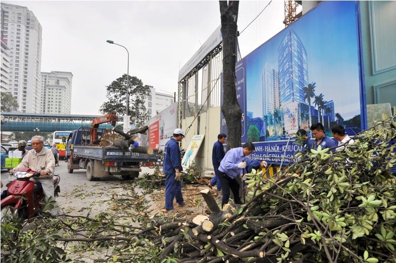 Có nên coi việc chặt cây xanh ở Hà Nội là