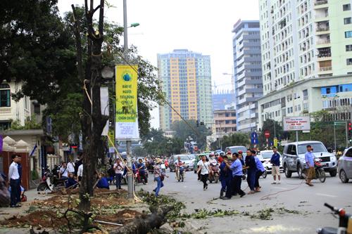 Chặt hạ cây xanh: Vi phạm Luật Thủ đô