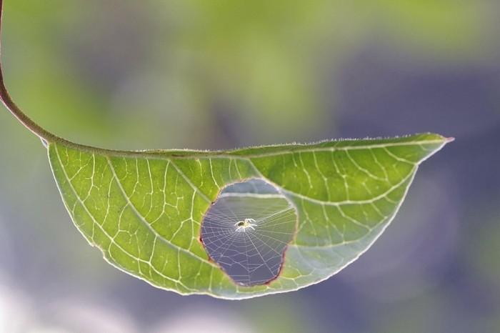 Tuyệt đẹp hình ảnh thiên nhiên qua ống kính - 9