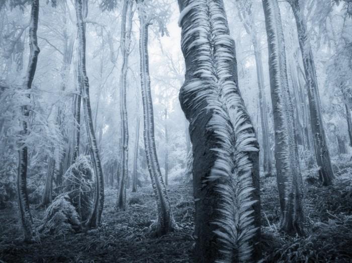Tuyệt đẹp hình ảnh thiên nhiên qua ống kính - 10