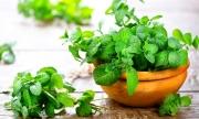 10 lợi ích tuyệt vời của lá bạc hà với sức khỏe