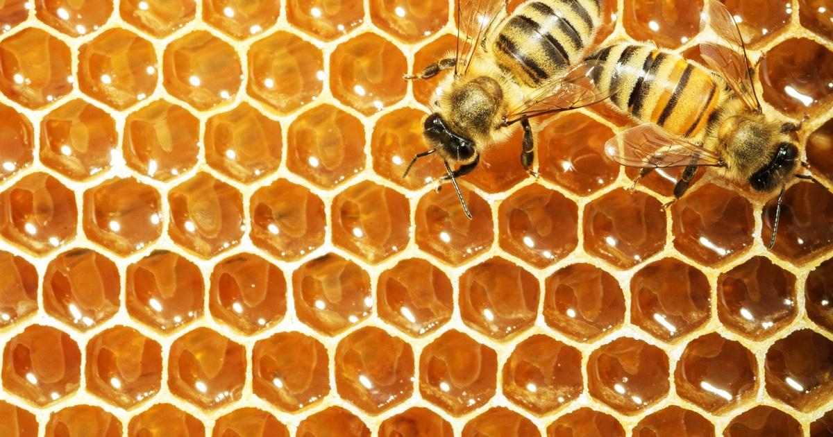 Mật ong rất tốt nhưng những người này nên hạn chế ăn