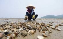 Chỉ đạo của Thủ tướng Chính phủ về các vấn đề liên quan đến hiện tượng hải sản chết bất thường