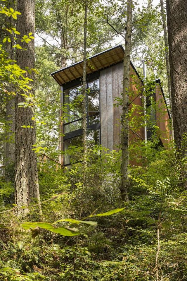 Nhà đối xứng năng lượng mặt trời ẩn mình giữa rừng linh sam - 4