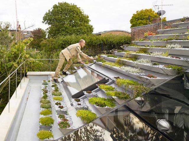 Vườn lạ như kim tự tháp có 800 cây trên mái nhà giữa phố thị đông đúc