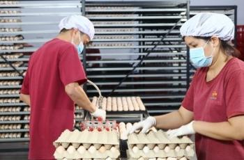 Nhà máy ấp trứng gia cầm Bel Gà: Thúc đẩy nông nghiệp Tây Ninh phát triển theo hướng công nghệ cao