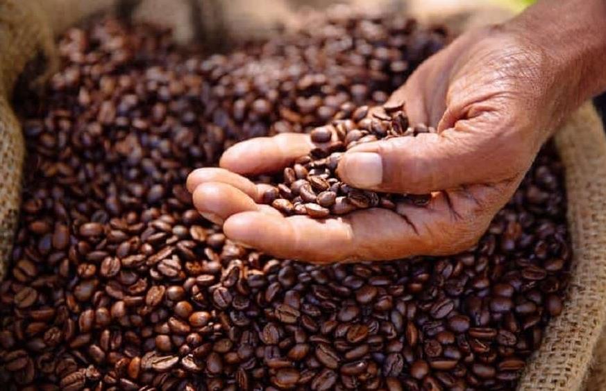 Giá hai loại cà phê đồng loạt giảm trong phiên 27/7